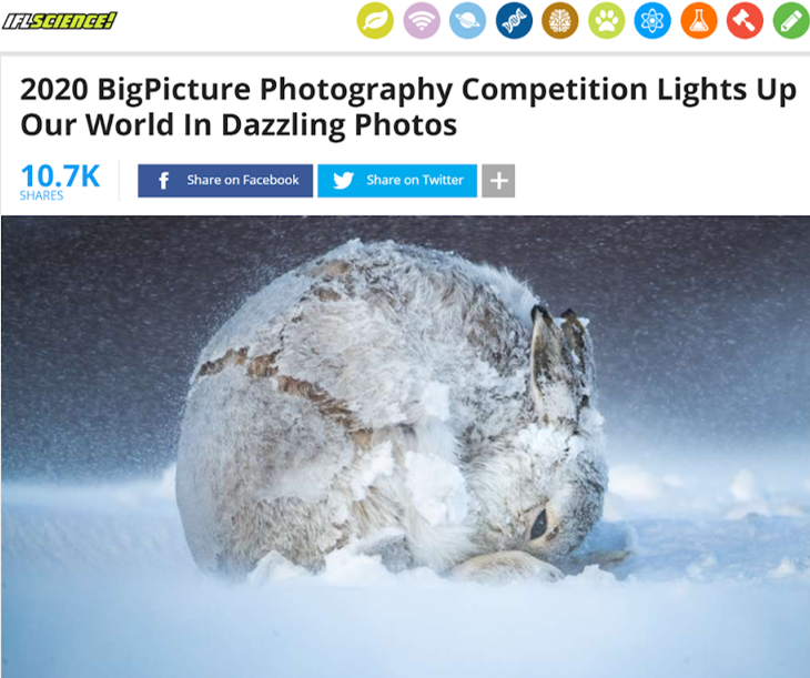 Scientist content creators BigPicture photography competition 2020 IFLScience article
